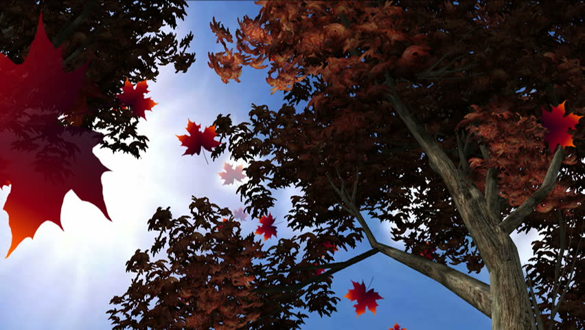 Autumn leaves falling low angle. | Shutterstock HD Video #1018262587