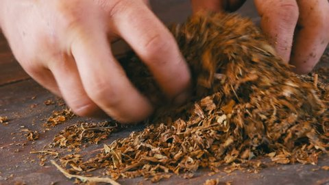 Male hands crumple dry leaves of tobacco on the table