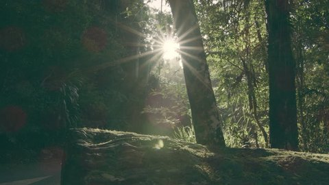 Sunny Lens Flare Green Road with Camera Move in Australian Rain Forest during the Day. Wide Shot on 4k RED Camera