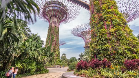 SINGAPORE - CIRCA JUNE 2018: Supertrees at Gardens by the Bay timelapse hyperlapse. The tree-like structures are fitted with environmental technologies that mimic the ecological function of trees.
