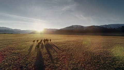 Wild Horses Running. Herd of horses running on the steppes in the background mountain. Sunset. Slow motion