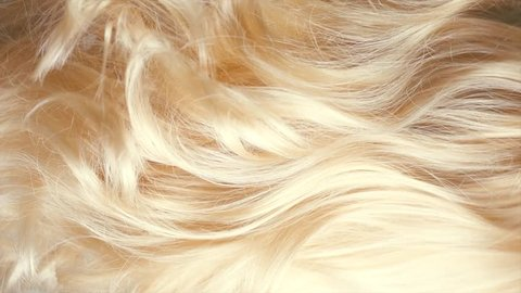Hair. Beautiful healthy long curly blonde hair close-up texture. Dyed Wavy white hair background, coloring, extensions, cure, treatment concept. Haircare. Slow motion 4K UHD video
