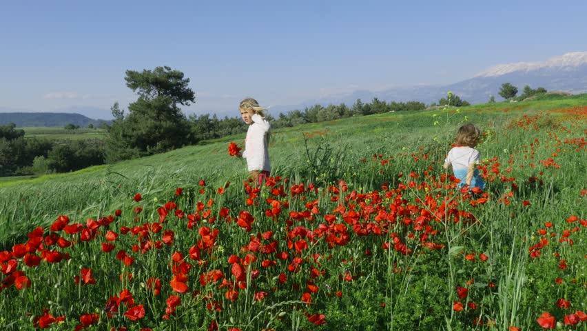 Little boy and little girl in the poppy flower field spring time    Shutterstock HD Video #1019250877