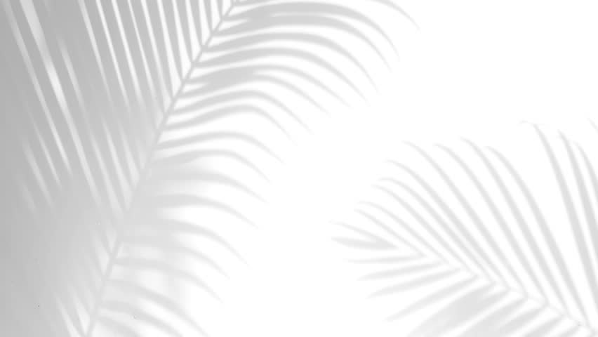Closeup the motion of shadow palm leaves on a white wall background. | Shutterstock HD Video #1019554747