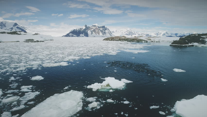 Penguins Colony Swimming. Aerial Flight Over Antarctica. Drone Overview Shot Of Gentoo Penguins Flock In Cold Ocean Water. Amazing Polar Landscape. Snow Covered Mountains Background. 4k Footage. | Shutterstock HD Video #1019710717