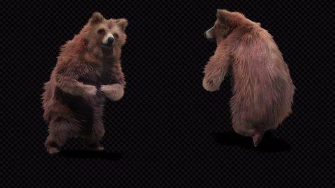 bear CG fur 3d rendering animal realistic CGI VFX Animation  Loop alpha dance GBboy Uprock  Walking