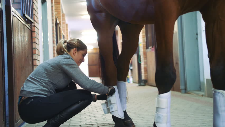 Woman banding legs of horse before ride. Side view of woman preparing horse for riding and banding legs for safety | Shutterstock HD Video #1020582067