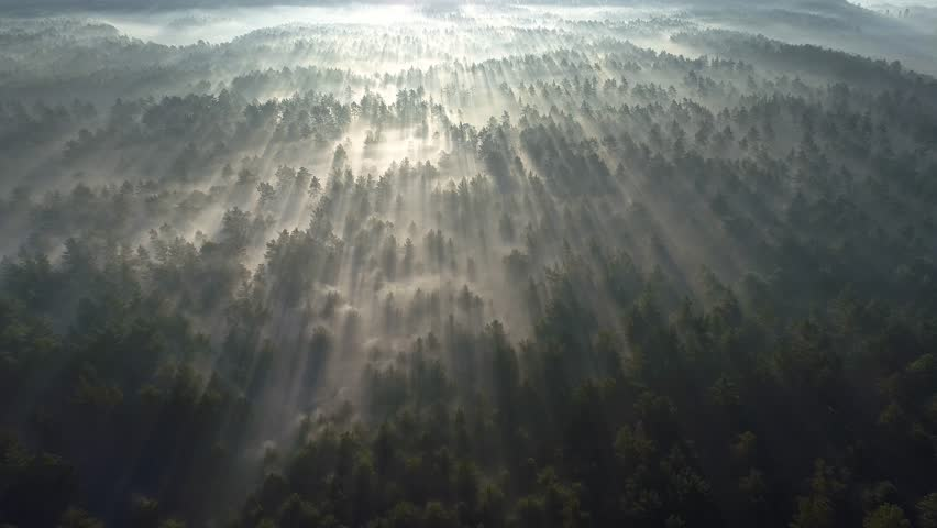 Sunrise in the misty forest. Marvelous view of flying over pine forest in the morning. There is magical fog all the way to the horizon. Aerial shot, 4K | Shutterstock HD Video #1020817987