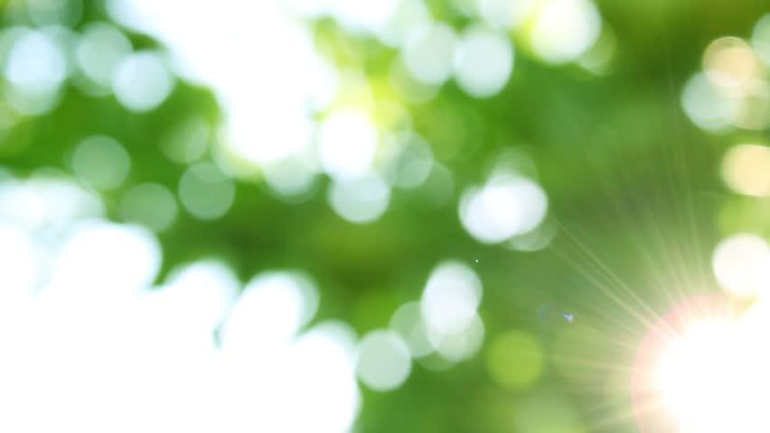 Defocus, nature background. | Shutterstock HD Video #1020894067