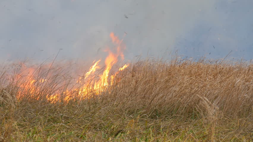 Wild fire spreads out across the forest steppe. Burning dry grass in natural fire | Shutterstock HD Video #1020928087