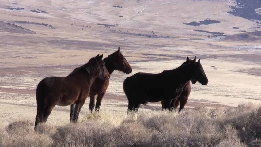 Herd of Wild Horses in the Utah Desert #1021491547