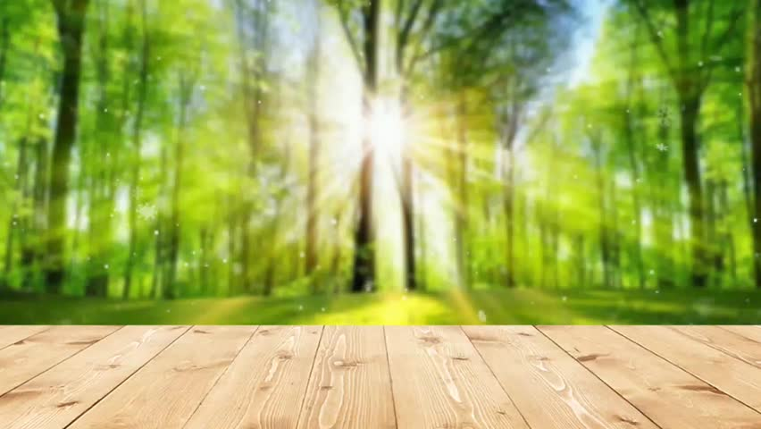 Natural Green Leaf Backgroundu2013 Stock Stock Footage Video (100