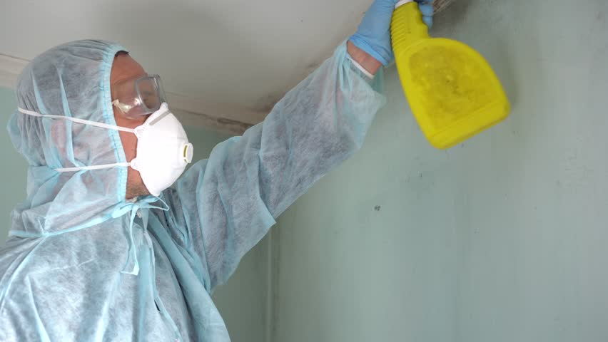 Cleaning Up Mold Removal Company Removing And Infested Materials