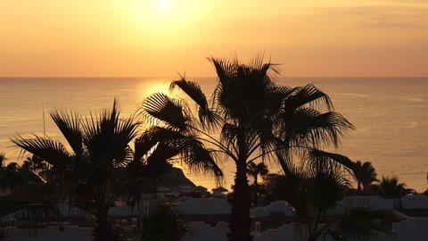 Silhouettes of palm trees on the background of sunrise over the Red Sea on a summer day in Sharm El Sheikh, Sinai Peninsula, Egypt. Rest on a tourist resort. Natural landscape