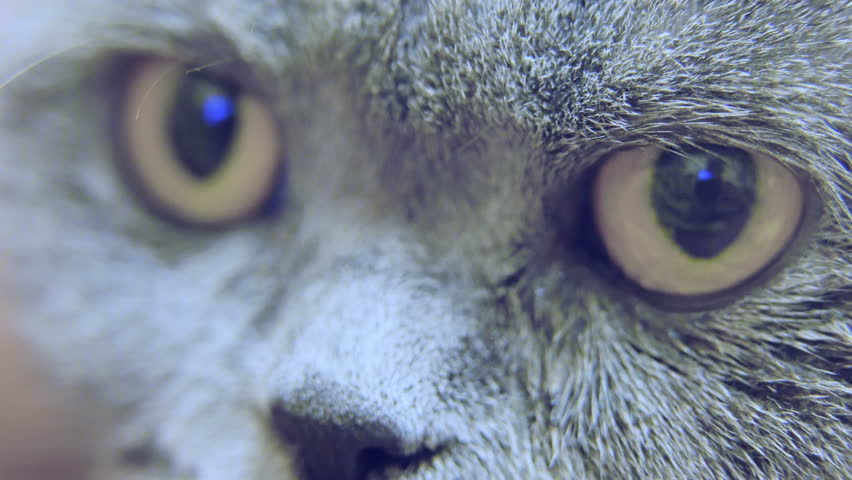 Extreme close-up of cat's eyes, pets in adoption center, animal protection | Shutterstock HD Video #1022693647