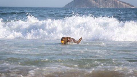 Dog with ball running out of sea in sand beach in Leblon, Copacabana, Rio de Janeiro, Brasil