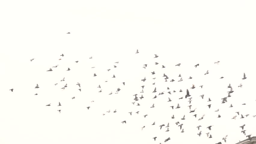 pigeons fly over the city slow motion #1023654427