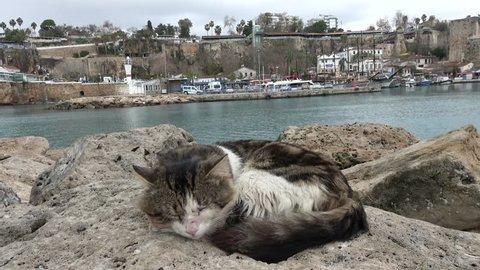Kaleici Harbor, Antalya, Turkey - 23th of January 2019: 4K Dirty street cat sleeps snuggled on rocks in the winter harbor