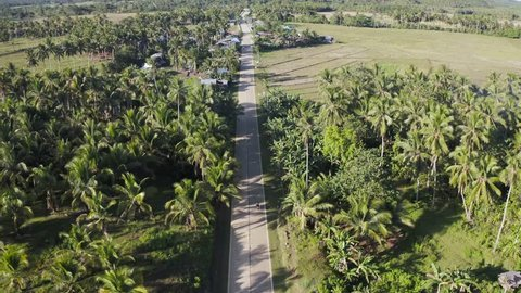 In rural Philippines, between giant palm trees, a person rides their scooter along the open road. Aerial tracking the driver on their journey towards a village. 4K Drone Footage, Siargao, Philippines.