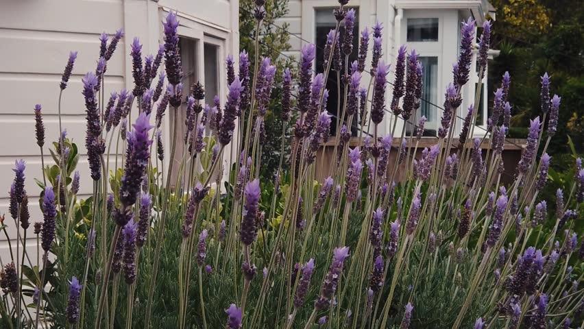 adel-miller-stripping-near-lavender-flowers-kerala-nudils-girls