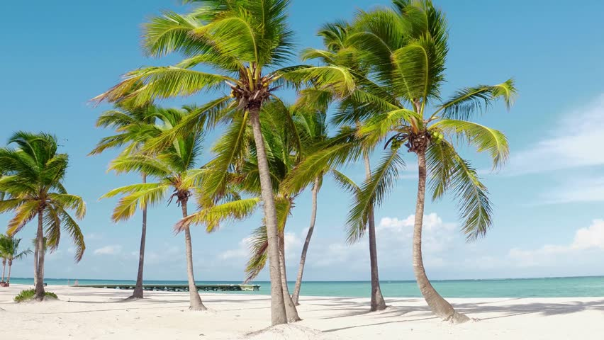 Best beaches in the world. Hawaii Islands Palms on the ocean / Sun umbrellas on the beach with white sand. deck chair, lounge, recliner, daybed, chaise-longue, sun lounger and the blue sea. Summer | Shutterstock HD Video #1024160627