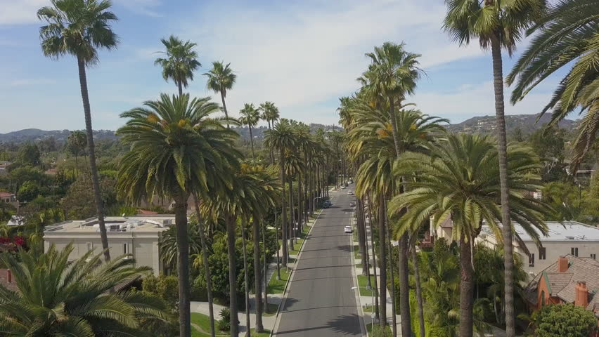 Aerial Drone Scenic Close Up of Skinny Palm Trees in Beautiful Beverly Hills California 4K on Sunny Windy Day in Los Angeles California with Hollywood Hill View and Mountains | Shutterstock HD Video #1024437767