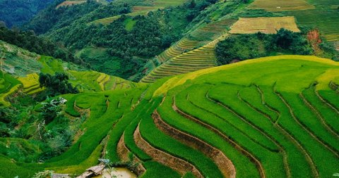 Aerial view above of Vietnam landscapes with terraces rice field. Rice fields on terraced of Mu Cang Chai, YenBai. Royalty high-quality free stock video landscape of terrace rice fields in Vietnam