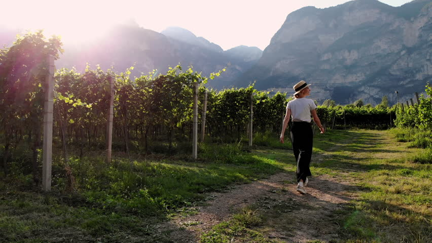 Female farmer inspects farm walking near grape bushes growing on plantation in green mountains valley during summer season.Young woman tourist visiting Ecotourism vineyards in piedmont of Italy region