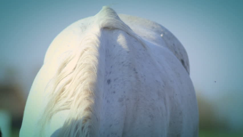 Close up of white horse