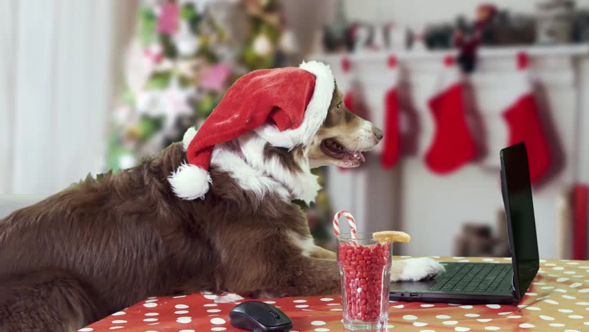 Dog wearing a Santa Claus hat working on a laptop in a Christmas decorated living room wide profile shot | Shutterstock HD Video #1024867427