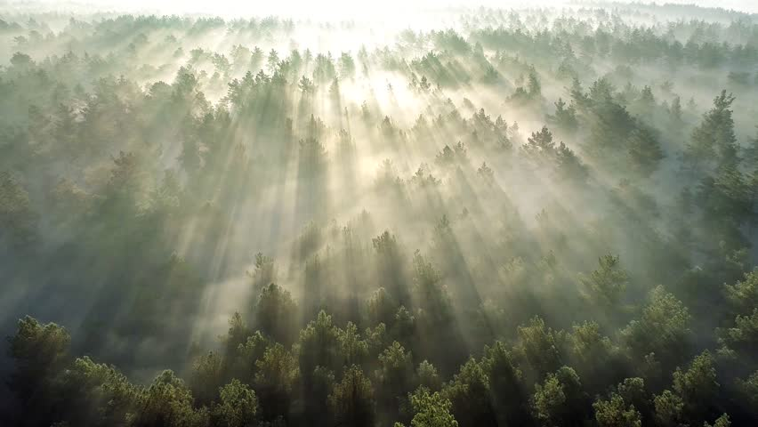 Summer forest early in the morning. Flying over misty pine forest at sunrise. High quality aerial drone shot | Shutterstock HD Video #1025007437