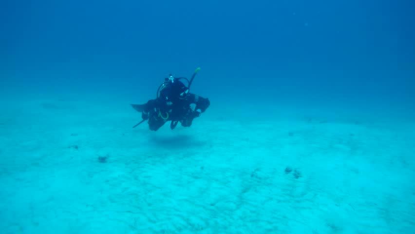 Scuba diver off the coast of Playa del Carmen swimming with remora fish. | Shutterstock HD Video #1025228087