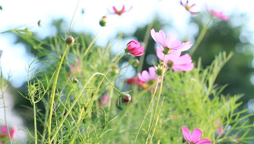 Wind Flower Background