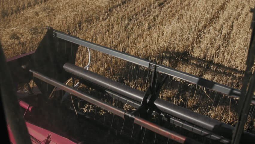 Harvest Natural Working at Dry Area from Cabin. Good Fresh Spikes after Growing Crops. Sunny Gold of Growth at Ripe Rural Meadow. Worker Driving Modern Industrial Cutting Truck with Chopper Closeup #1025542517