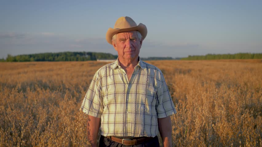 In the movement of an elderly caucasian man farmer in a cowboy hat is waist deep in the field of ripe grain yellow, in the light of the sunset, looking at the camera, on a hot summer day, slow motion