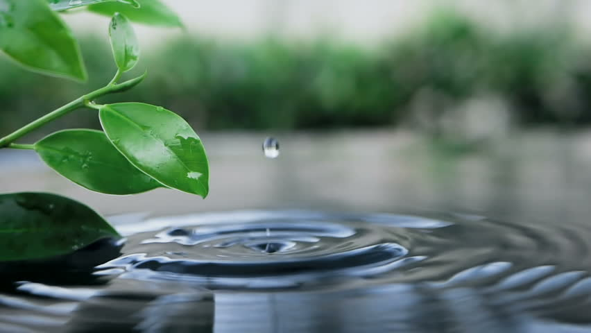 Fresh green leaf with water drop over the water , a nature leaf branch relaxation with water ripple drops concept , slow motion shot | Shutterstock HD Video #1025831147