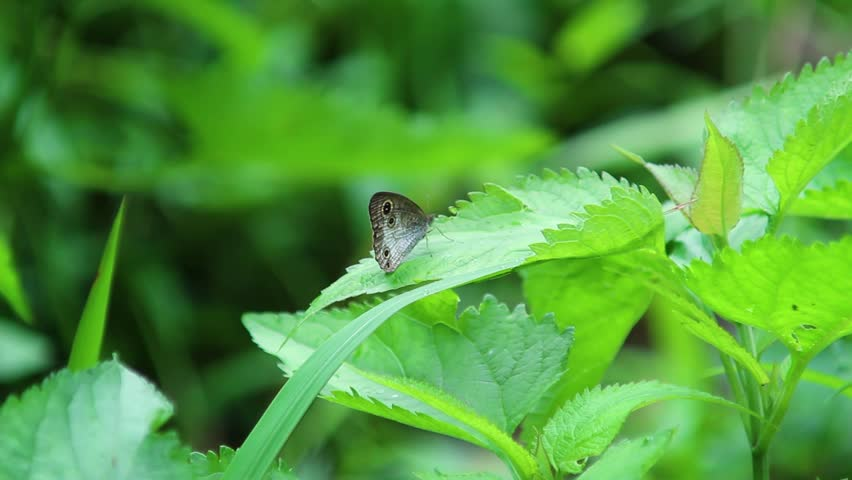 Butterfly on the leaf than Fly   Shutterstock HD Video #1026153977