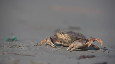 Shallow Focus of Crab on The Beach on Sunny Day