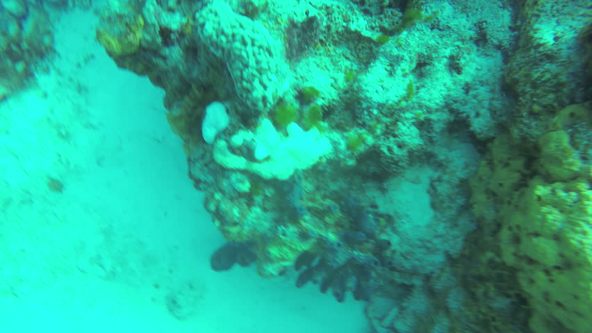 Tropical Fish On Vibrant Coral Reef | Shutterstock HD Video #1026300047