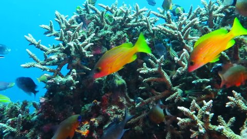Healthy coral reef with variety of fish and underwater wildlife