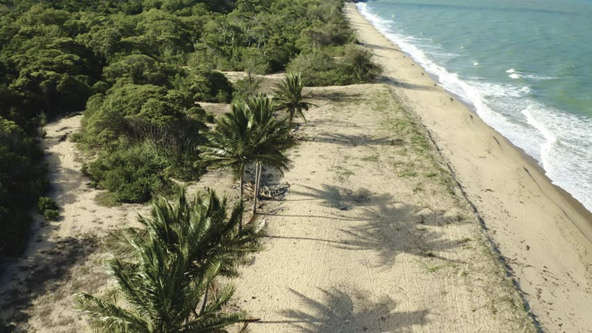 Aerial, palms on Wangetti sand beach in Cairns in Queensland, Australia | Shutterstock HD Video #1027271657