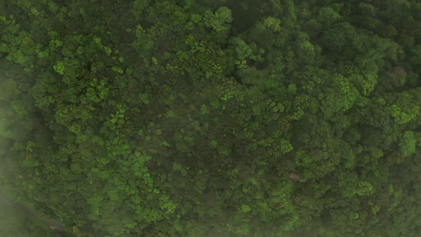 Aerial shot flying over a dense jungle canopy. The shot ascends above the tree canopy and through thick clouds. | Shutterstock HD Video #1027532597