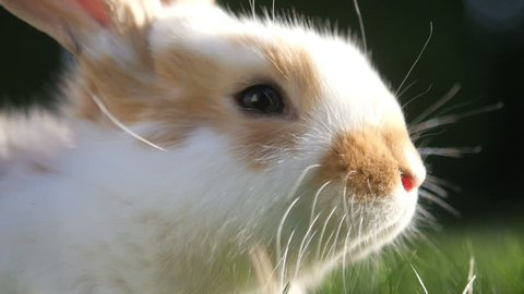 closeup of a beautiful little rabbit sitting on a sunny meadow