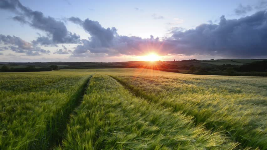 Sunset over a field of ripening barley blowing in the breeze | Shutterstock HD Video #10279997