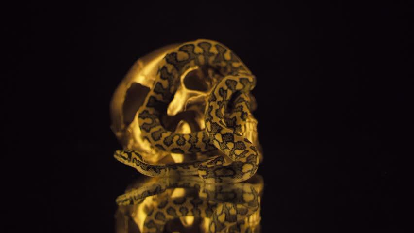 Wealth, sin and death | Shutterstock HD Video #1028082197