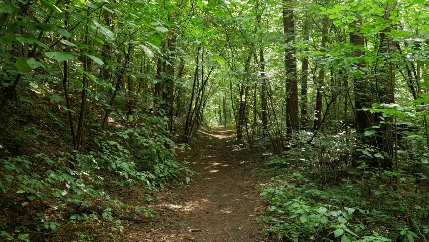 Personal Perspective of Walking on a Path in the green Forest, Steady Cam Shot. Pov of Hiker Walking on Trail Through the Forest | Shutterstock HD Video #1028121797