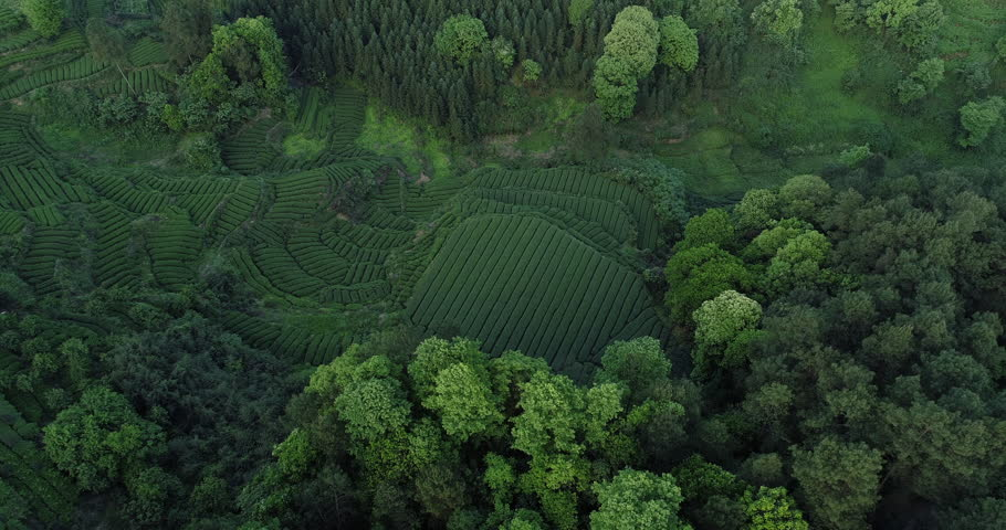 Aerial above view of beautiful tea farm in the Mountain in Sichuan China. aerial shot of asian fresh tea terraced fields surround by spring trees in the valley 4k drone nature landscape footage  | Shutterstock HD Video #1028207147