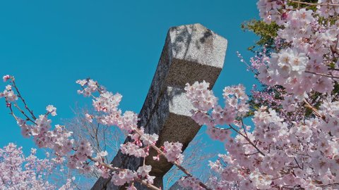 Cherry blossoms and Torii gate of temple  in Nagano, Japan