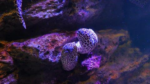 Sea eels in fish tank, Aquarium decoration. Moray Eel in fish tank.