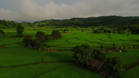Aerial Shot rice field,rice Terrace and mountain tilt up.Aerial view above of Thailand landscapes with  rice field. Rice fields of Maelanoii, Maehongson. Is a beautiful tourist destination in Thailand
